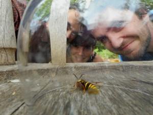 Hoornaarvlinder in een wijnglas