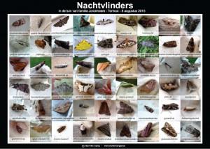 foto-overzicht van de gevangen soorten