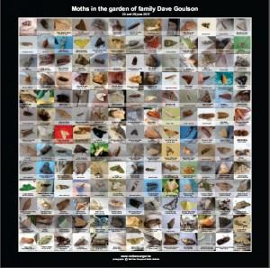 De 170 soorten uit Goulson's tuin