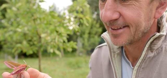 In de tuin van hommelprof Dave Goulson, Zuid-Engeland: 170 soorten!