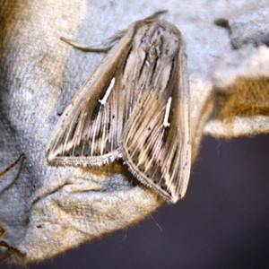 In de tuin van professor Martin Hermy: 40 soorten waaronder de zeldzame witte-l-uil